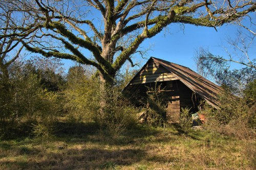 Tattnall County GA Steep Barn Photogrpah Copyright Brian Brown Vanishing South Georgia USA 2016