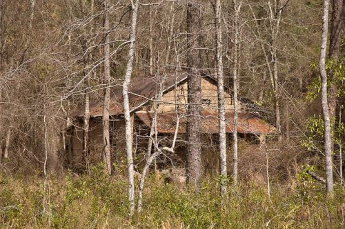 Tar Paper Tenant Farmhouse In Woods Jordan GA Wheeler County Photograph Copyright Brian Brown Vanishing South Georgia USA 2016