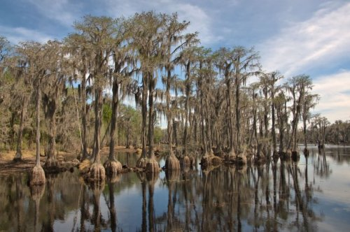 banks-lake-national-wildlife-refuge-cypress-trees-photograph-copyright-brian-brown-vanishin-south-georgia-usa-2016