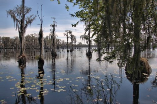 banks-lake-national-wildlife-refuge-ga-photograph-copyright-brian-brown-vanishing-south-georgia-usa-2016