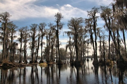 banks-lake-national-wildlife-refuge-lakeland-ga-photograph-copyright-brian-brown-vanishing-south-georgia-usa-2016