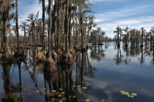banks-lake-national-wildlife-refuge-lanier-county-ga-photograph-copyright-brian-brown-vanishing-south-georgia-usa-2016