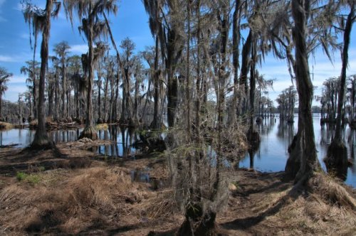 lakeland-ga-banks-lake-national-wildlife-refuge-photograph-copyright-brian-brown-vanishing-south-georgia-usa-2016