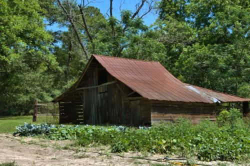 daisy ga barn and garden photograph copyright brian brown vanishing south georgia usa 2016