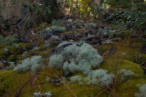 irwin-county-ga-alapaha-river-scrublands-lichens-mosses-photograph-copyright-brian-brown-vanishing-south-georgia-usa-2016
