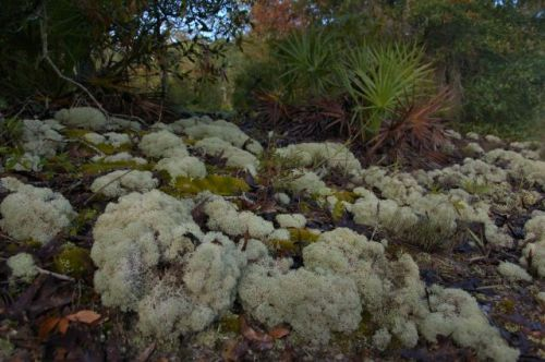 irwin-county-ga-alapaha-river-scrublands-lichens-photograph-copyright-brian-brown-vanishing-south-georgia-usa-2016