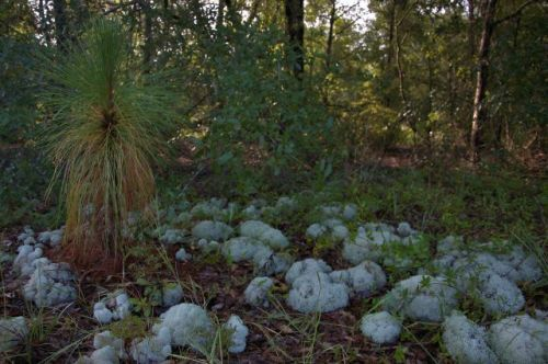 irwin-county-ga-alapaha-river-scrublands-photograph-copyright-brian-brown-vanishing-south-georgia-usa-2016